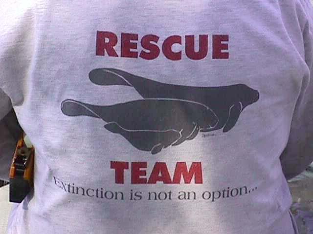 seaworld rescue team | Memphis Manatee
